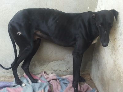 Branded galgo 400 1 16 7 2018