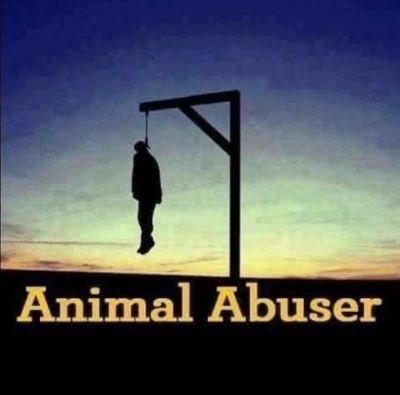 Animal Abuser poster 400