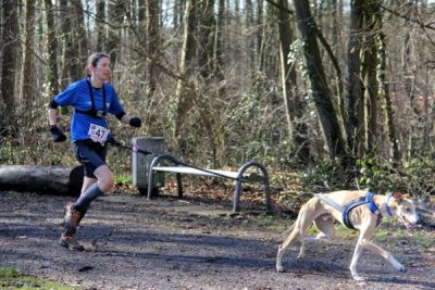 Canicross galgo Levriers sans Frontiers 400