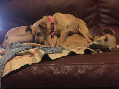 Anns Canine Care Sabi 400 2 2019