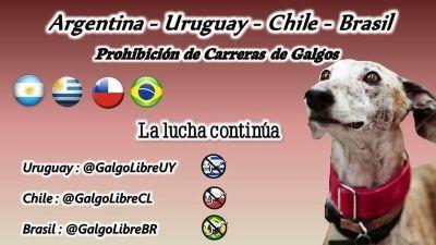 Proyecto Galgo Argentina 400