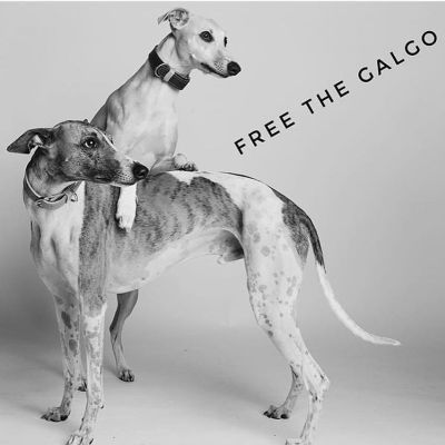 Yo galgo Free the Galgo 1 400