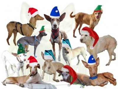 Podenco World Holland Xmas 2018 400