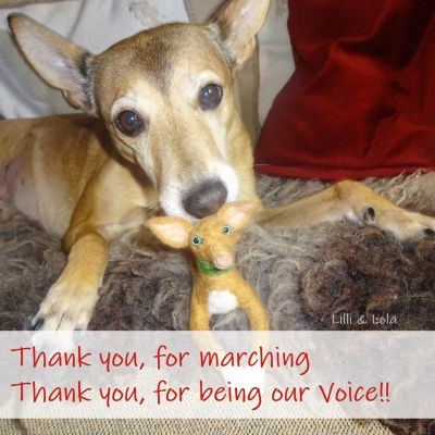 Thank you for Marching podenco 400