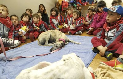 SOS Galgos educating children 400 5 2019