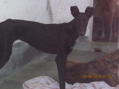 Scooby black beauty 400 8 2019