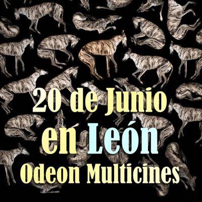 Yo Galgo Leon 400