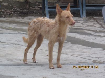 Scooby podenca Julia 400 10 2019