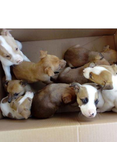 Cordoba dumped puppies 400 12 2019