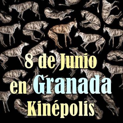 Yo Galgo Granada 400