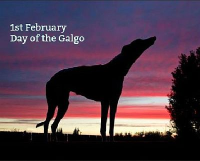 Day of the Galgo  400 1 2 2020
