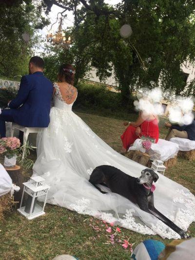 Scooby wedding galgo 400 7 2019