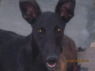 Scooby black beauty face 400