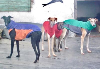 Scooby 4 galgos 400 1 12 2019