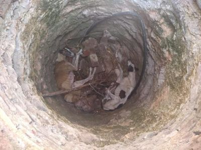 Galgos in well 1 1 2020 400