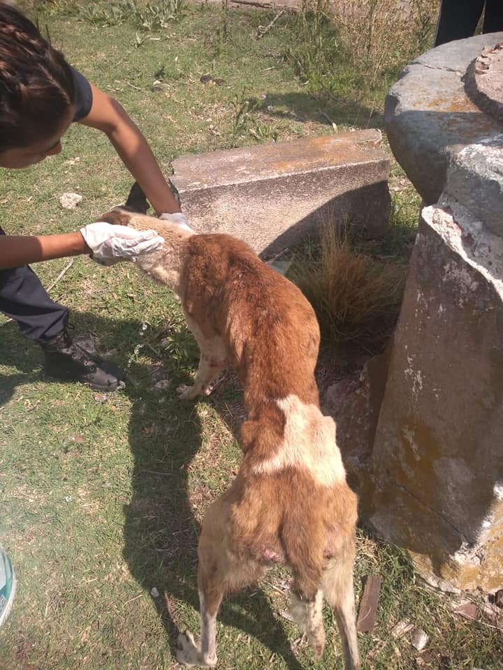 Galgos in well 3