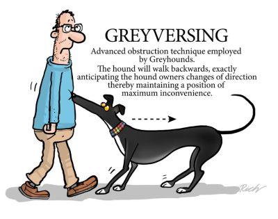 Greyversing 400