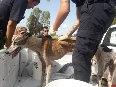 Galgos in well 5 400