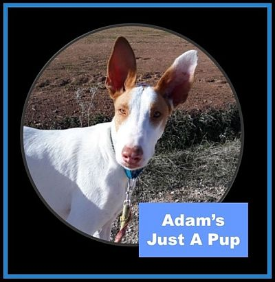 Hope for Podencos Adam 400