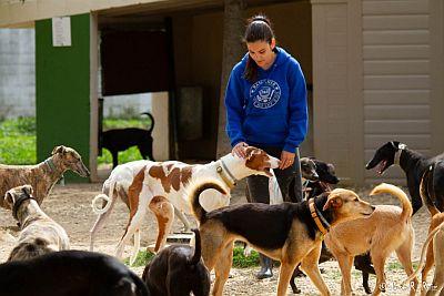 Refugio Kimba volunteer 400