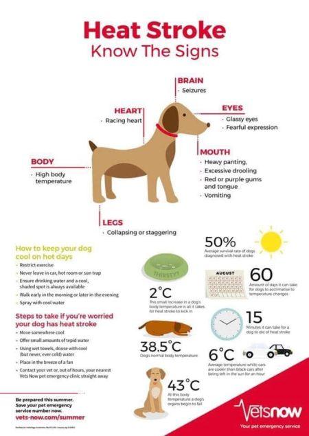 Heatstroke in dogs 450