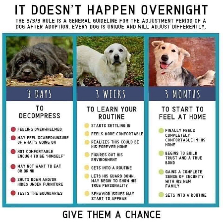 Give dogs a chance 450