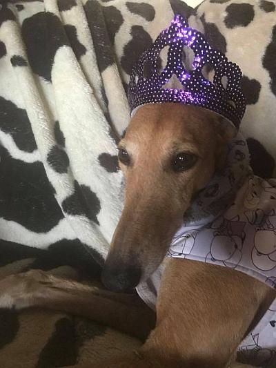 Ann MP Princessa crown 1 400