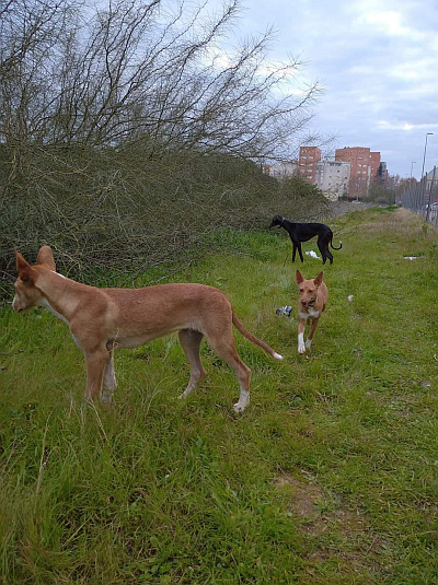Seville pods and galgo 400 19 1 2021