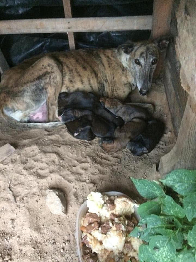 Merida galga and babies 400  6 2020