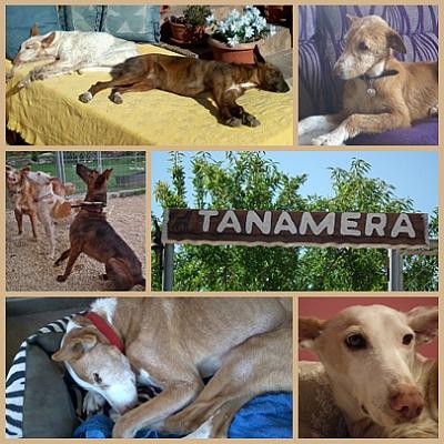 Tanamera refuge 400 6 2020