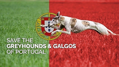 Save the galgos and greyhounds of Portugal 7 2020 400