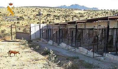 Galgos 112 25 dogs die 400