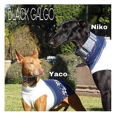Black galgo and pod 400