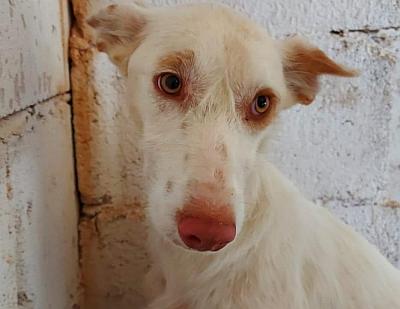 SOS Rescue white pod 1 400 24 5 2021