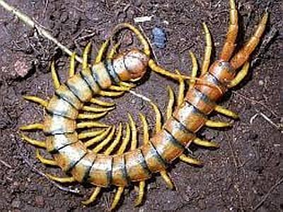 Centipede 400