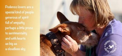 Podenco lovers are special people 400