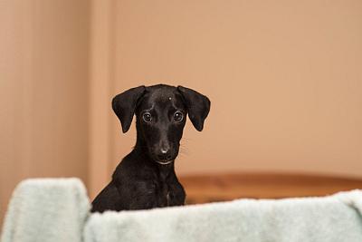 Moonleaks puppy 400