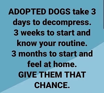 Adopted dogs 400