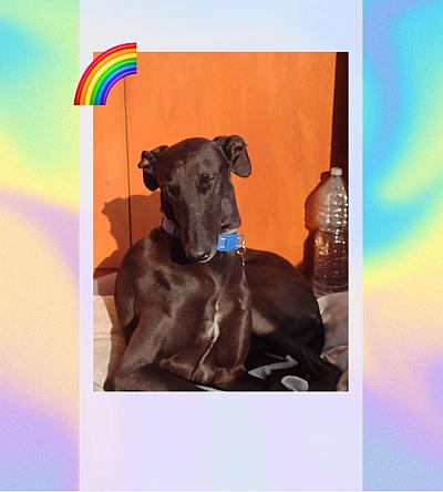 GRA Gitano rainbow 7  400