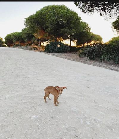 Malaga pup alone 400