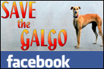 Galgo group Facebook